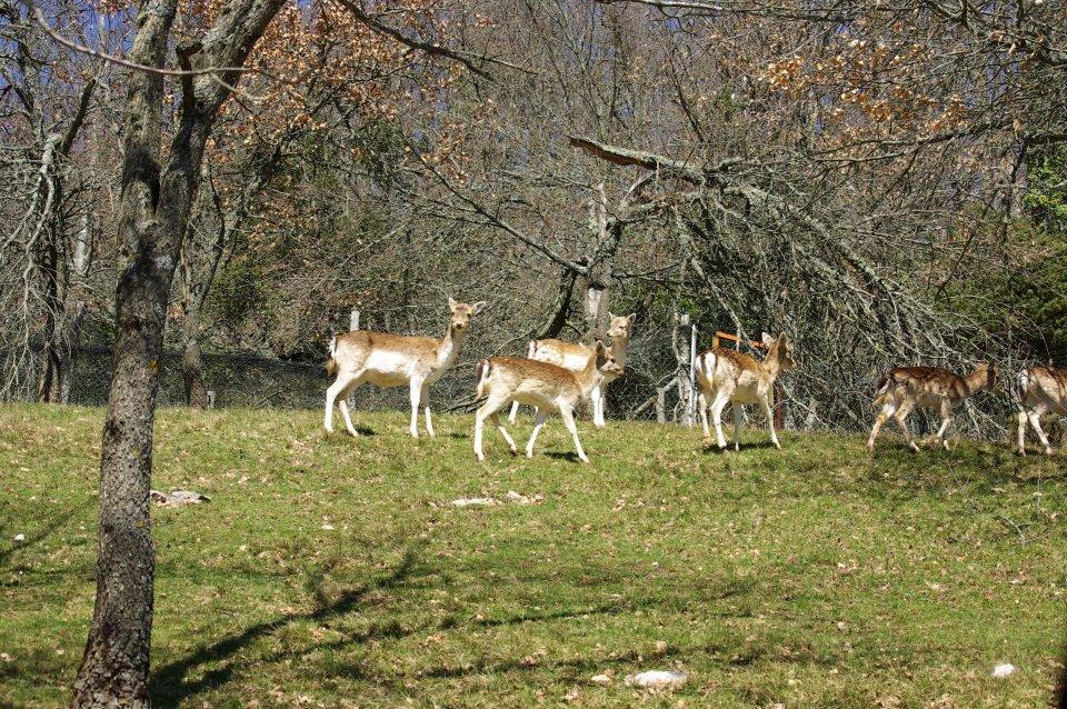 animaux-camps-gite-lebouchard